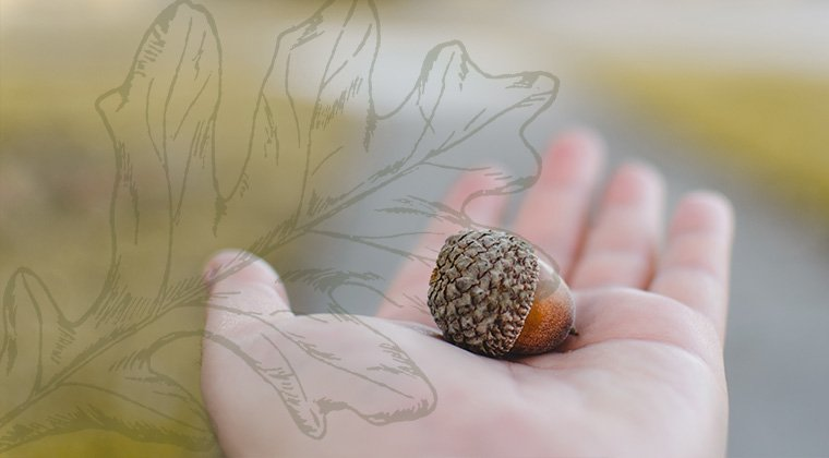 An acorn in a hand, representing trends in planned giving.